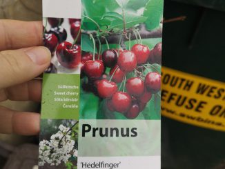 Cherry tree tag
