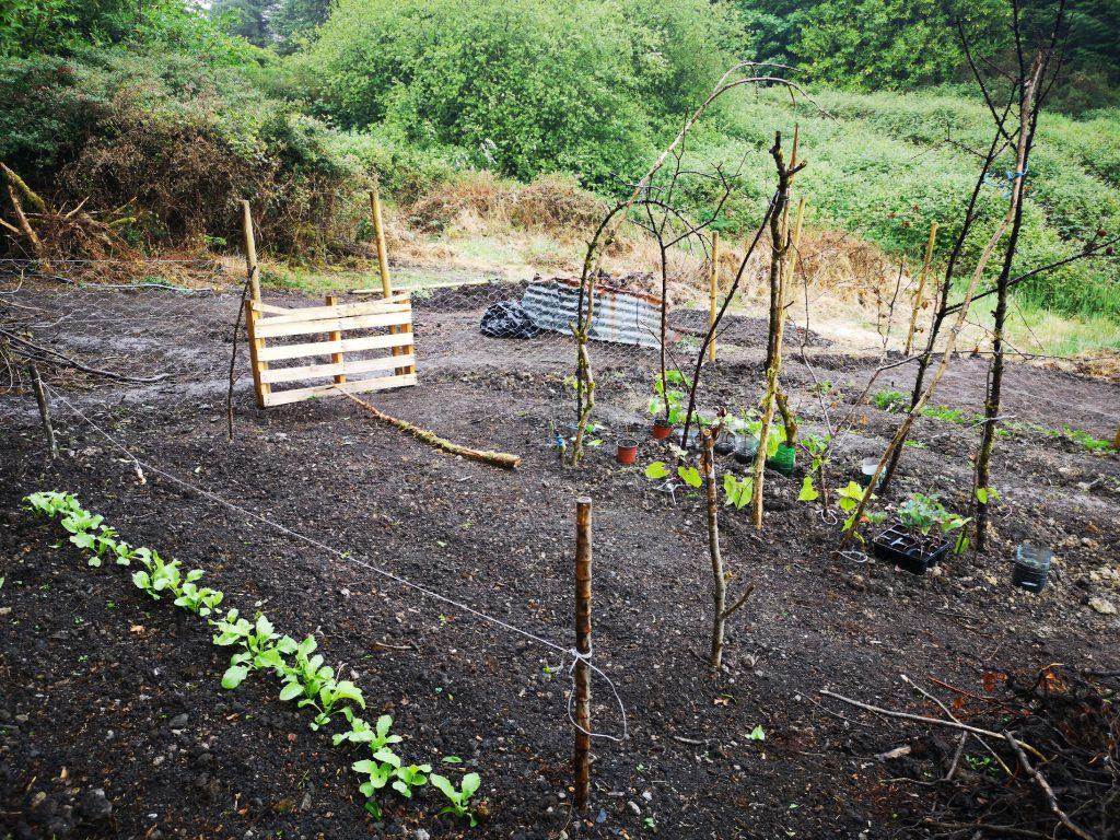 Veggie patch 1