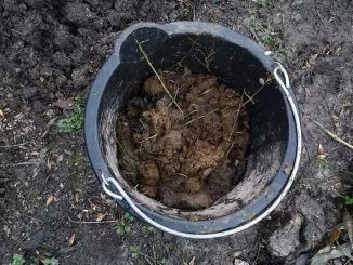 Bucket of cow muck
